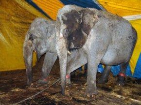 bron: http://animals-in-the-news.blogspot.com/2009/07/onderzoek-wageningen-universiteit.html